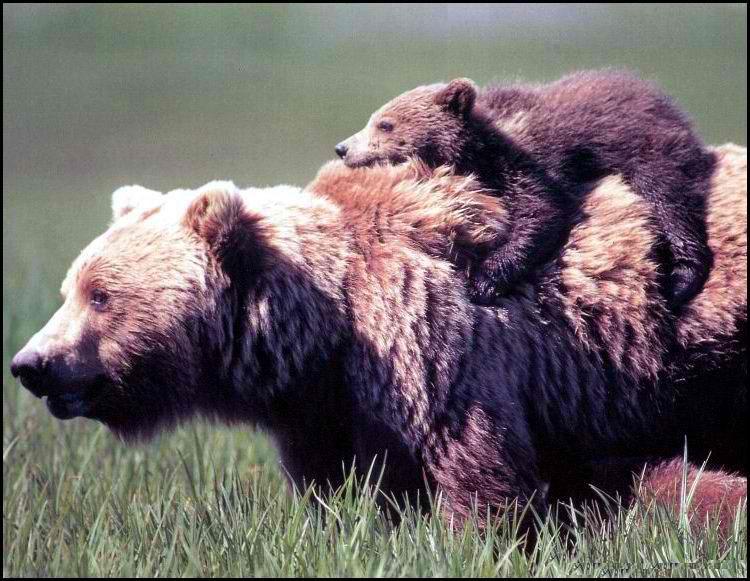 bear hug :)