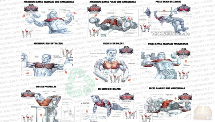 bodybuilding chest exercises chart: How to build a bigger and better chest chest pinterest