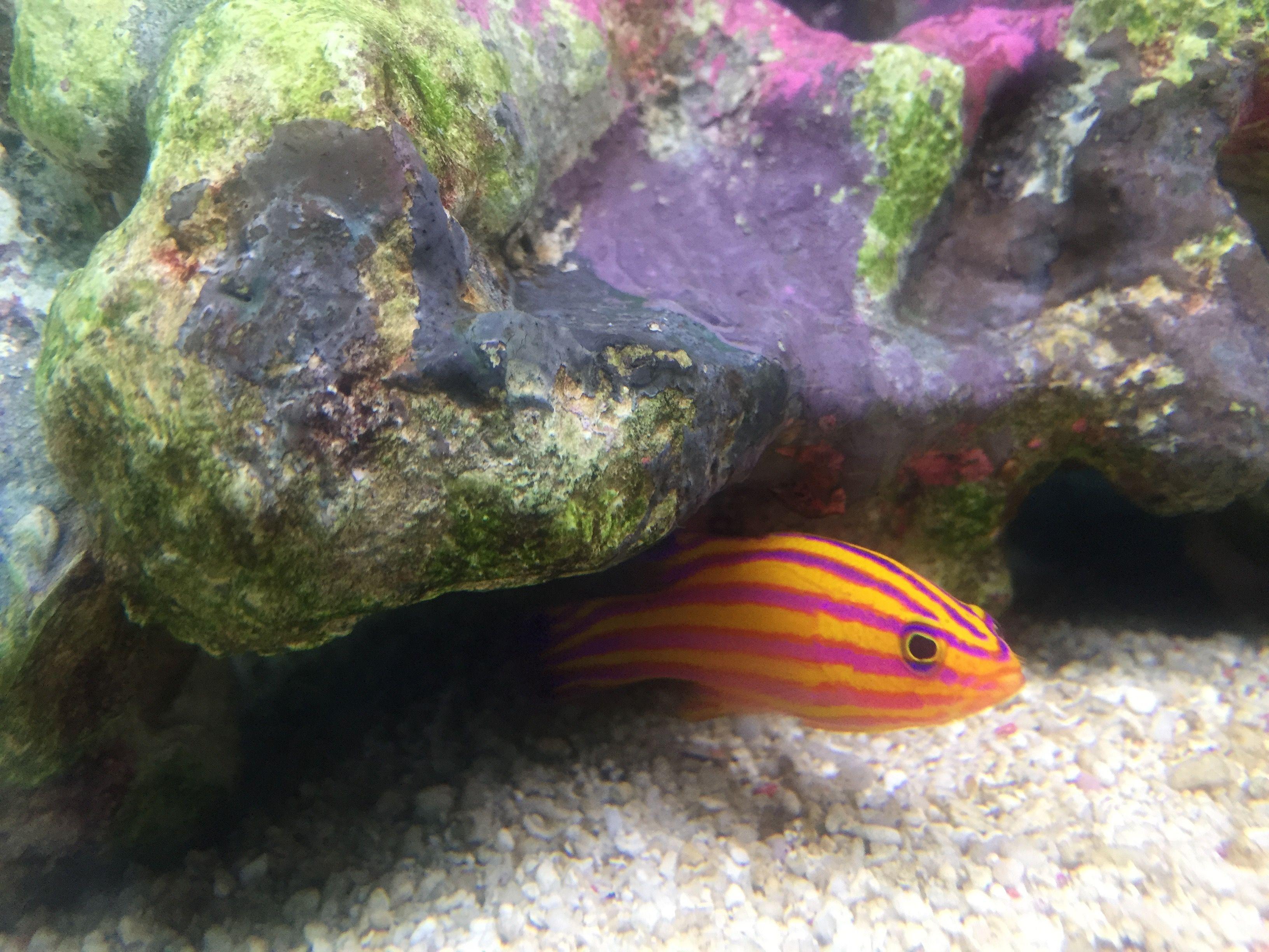 87 best Marine Fish images on Pinterest