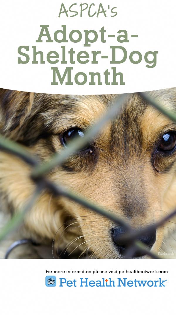 Pin On Animal Health And Welfare