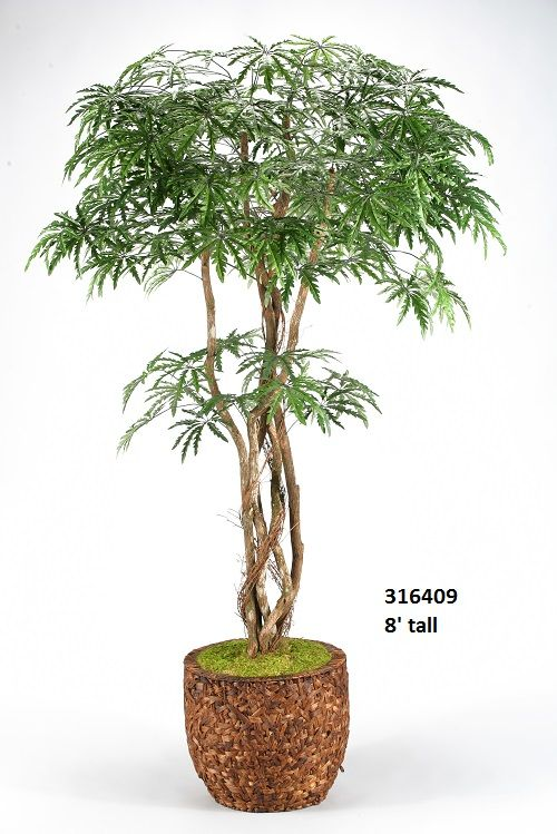 8 Finger Aralia Tree In Round Banana Leaf Basket