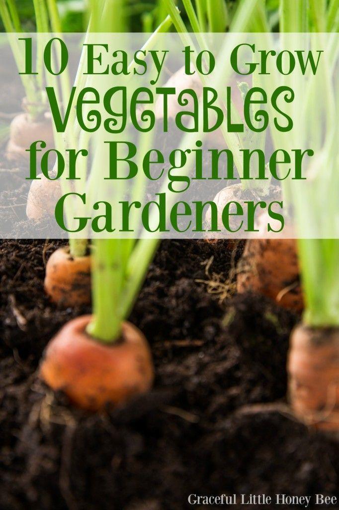 10 Einfaches Gemüse für Anfänger – Mach es selbst