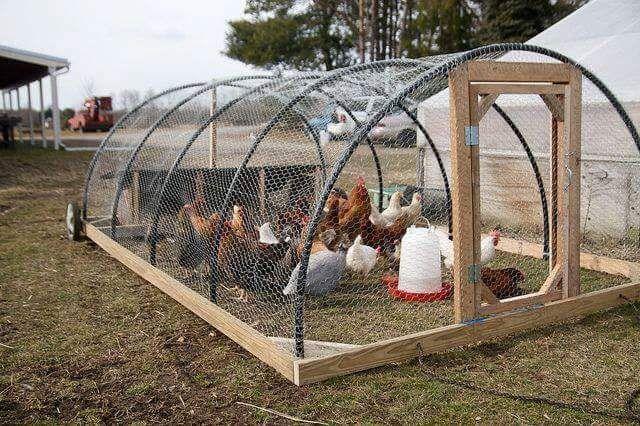 Corral de gallinas movil granja escuela gallineros for Como hacer un criadero de cachamas