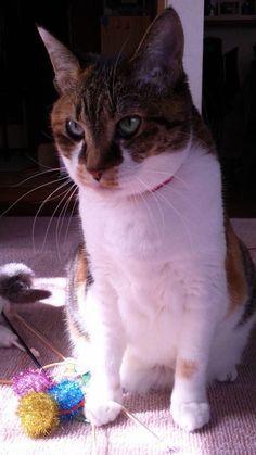 Resultado de imagen para gatitos hermosos y simpaticos