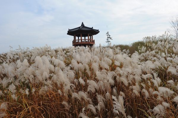 Autumn, the reed is the only one of its kind at octagonal pavilion in Geumg river Seongsan area [ 가을, 갈대밭이 일품인 금강 성산지구 팔각정 ]