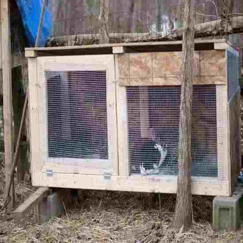 The Basics of Raising Homestead Rabbits   Meat rabbits ...