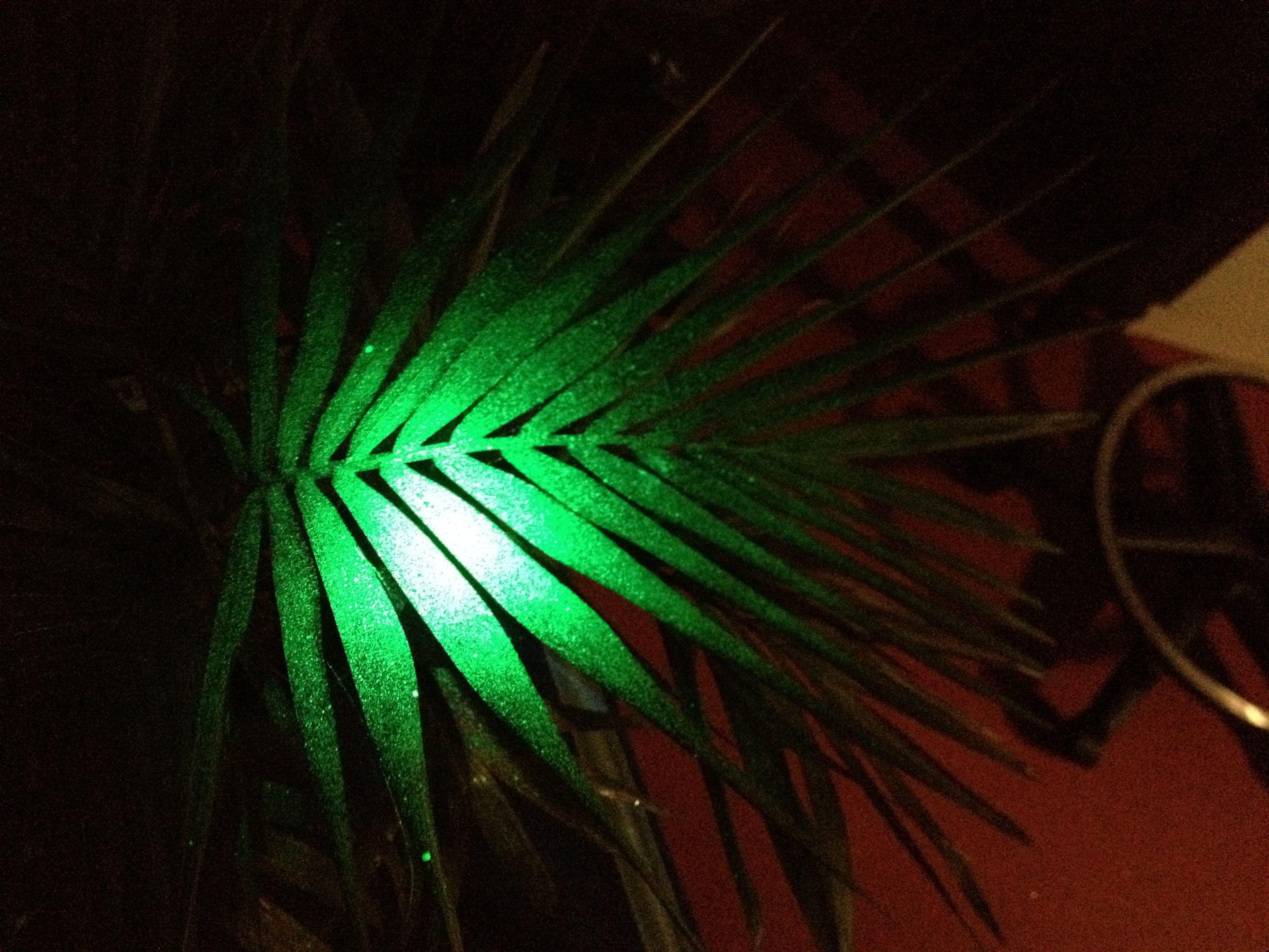 Galassia sprayed on live palm