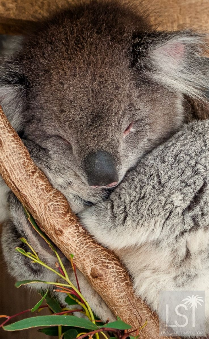 Native Australian animals in pictures from cuddly to
