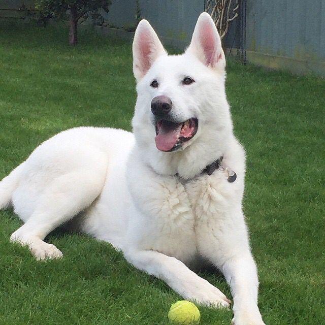 My beautiful boy Snow Bo Bear, love him!