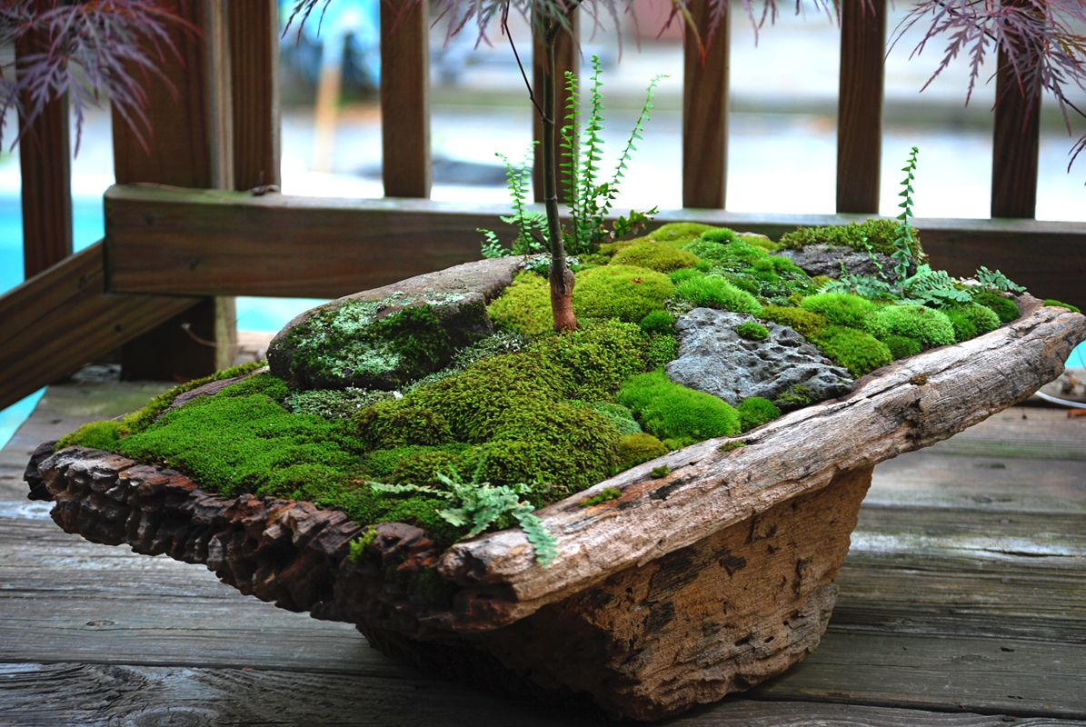Moss Dish Garden | Small garden design, Indoor garden, Moss garden