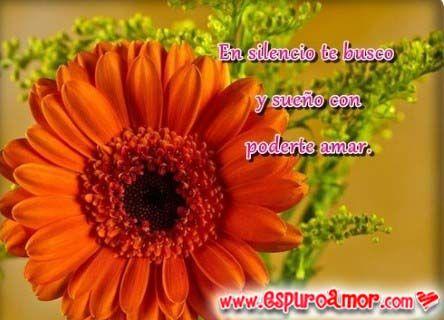 Imagenes De Amor Con Flores Bonitas Para Descargar Gratis Para Mi