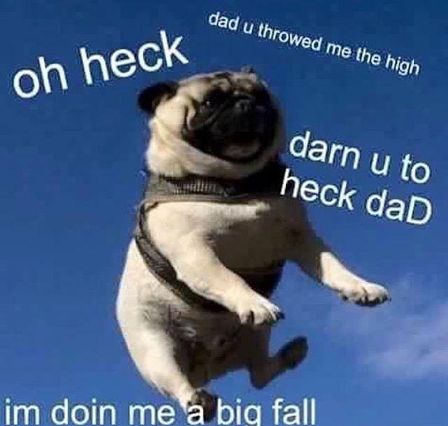 594050b6f987f524e8587144d150ad09 i'm doing me a big fall funny dogs pinterest big, memes and
