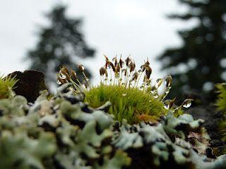 Favorite Mossy Tree 2