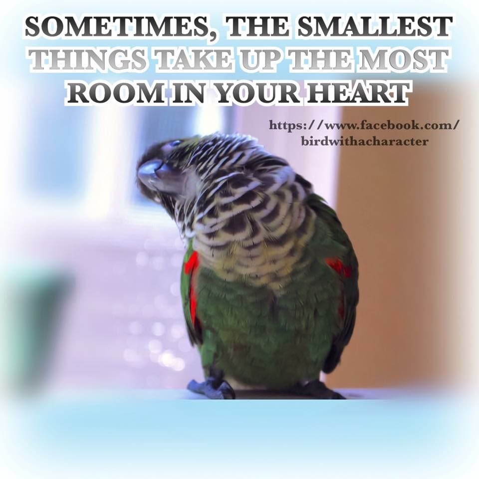 Pin By Liny On Parrot Sayings Best Pet Birds Funny Parrots Bird Quotes