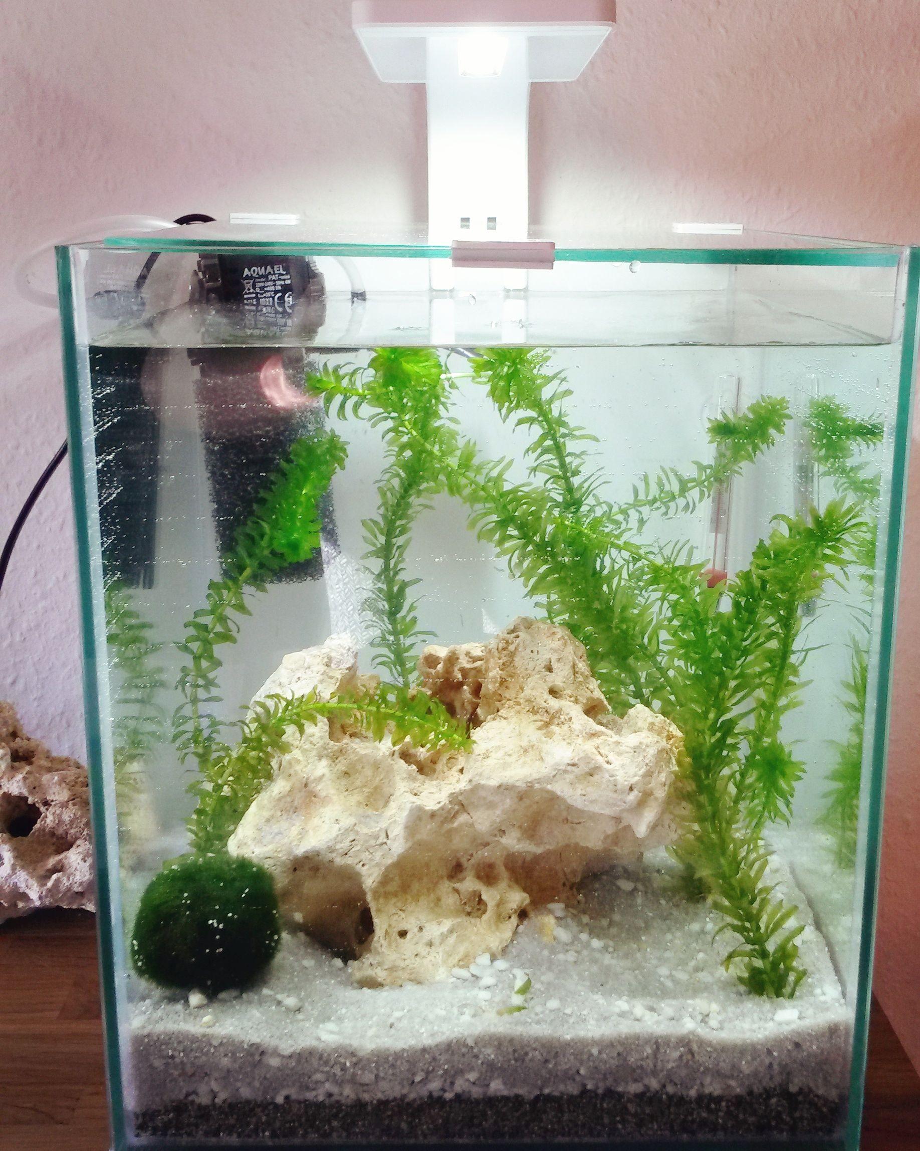 Nanocube aquarium pinterest aquariums