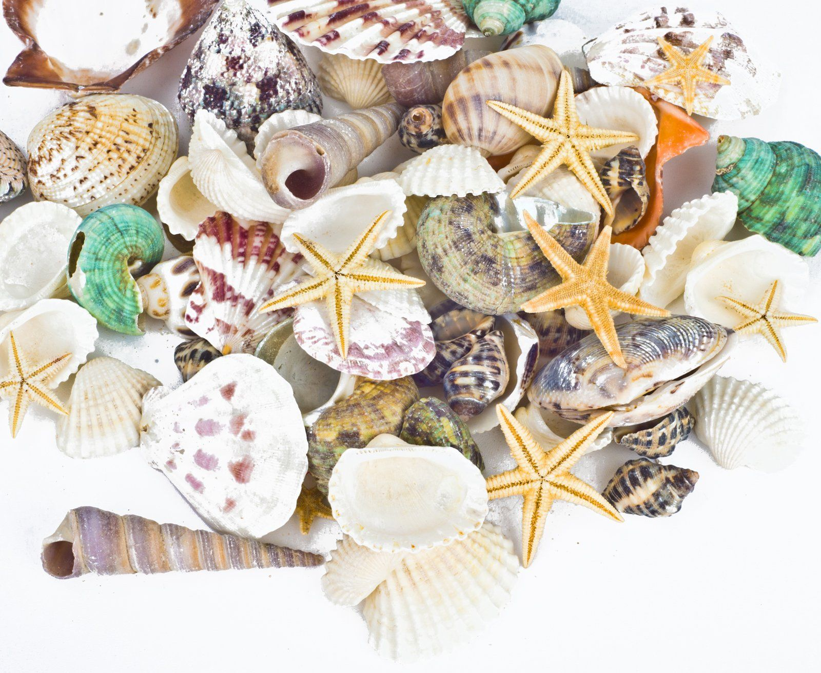 pcs Famoby Sea Shells Mixed Beach Seashells Starfish for Beach Theme Party Wedding Decorations DIY Crafts Candle Making Fish Tank Vase Fillers Home Decorations Supplies 70