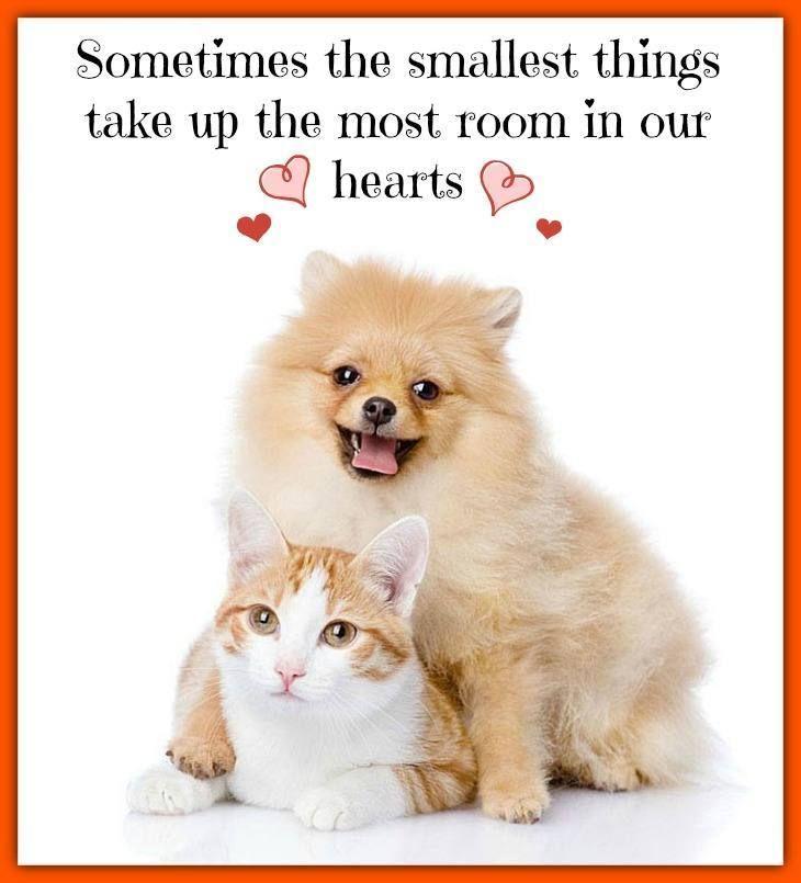 Most Inspiring Pom Canine Adorable Dog - 5941b60fbc20723ed29424700f70335b  Image_472180  .jpg