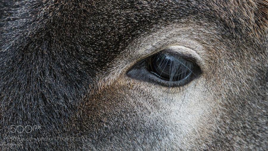 Das Auge by rwarnecke via http://ift.tt/2dKBM8l
