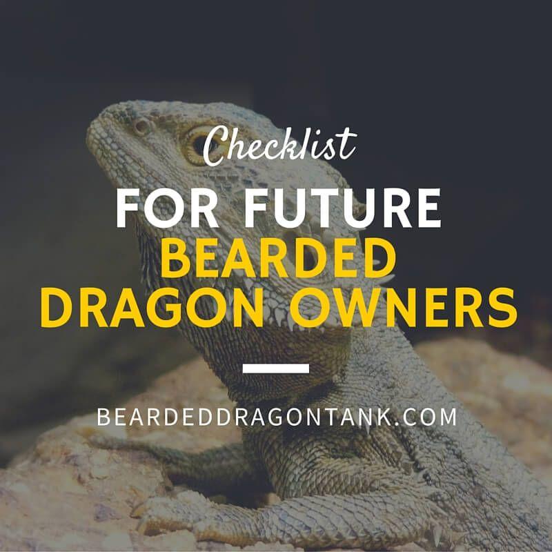 Bearded Dragon Info: Checklist For Future Baby Bearded