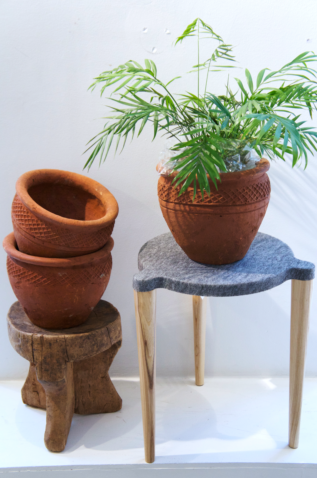 Love decorating with plants? So do we! These lovely Kenyan