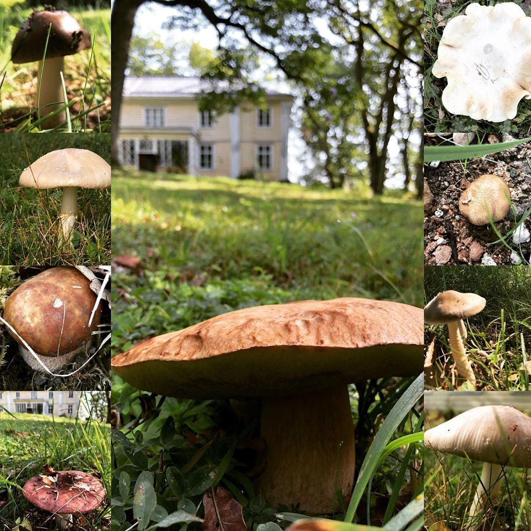 Mushrooms were the roses in the garden of that unseen world because the real mushroom plant was underground. The parts you could see - what most people called a mushroom - was just a brief apparition. A cloud flower.  Margaret Atwood The Year of the Flood #rauhalinna #rauhalinnankartano #oak #oaktree #tree_magic #mushroom #mushrooms #gardening #trädgård #inspiredbynature #inspiredbyliterature #margaretatwood #quote #mushroomsweretheroses #inspired #creativity #unseenworld #creativework #creative #margaretatwood