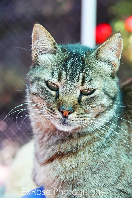 Cat sanctuary, Cat
