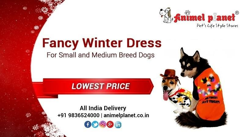 Buy The Best Pet Products For Your Lovely Pets From The Best Pet Product Shop In Siliguri Kolkata Haldia At Animel Plane Online Pet Store Pet Life Best Dogs
