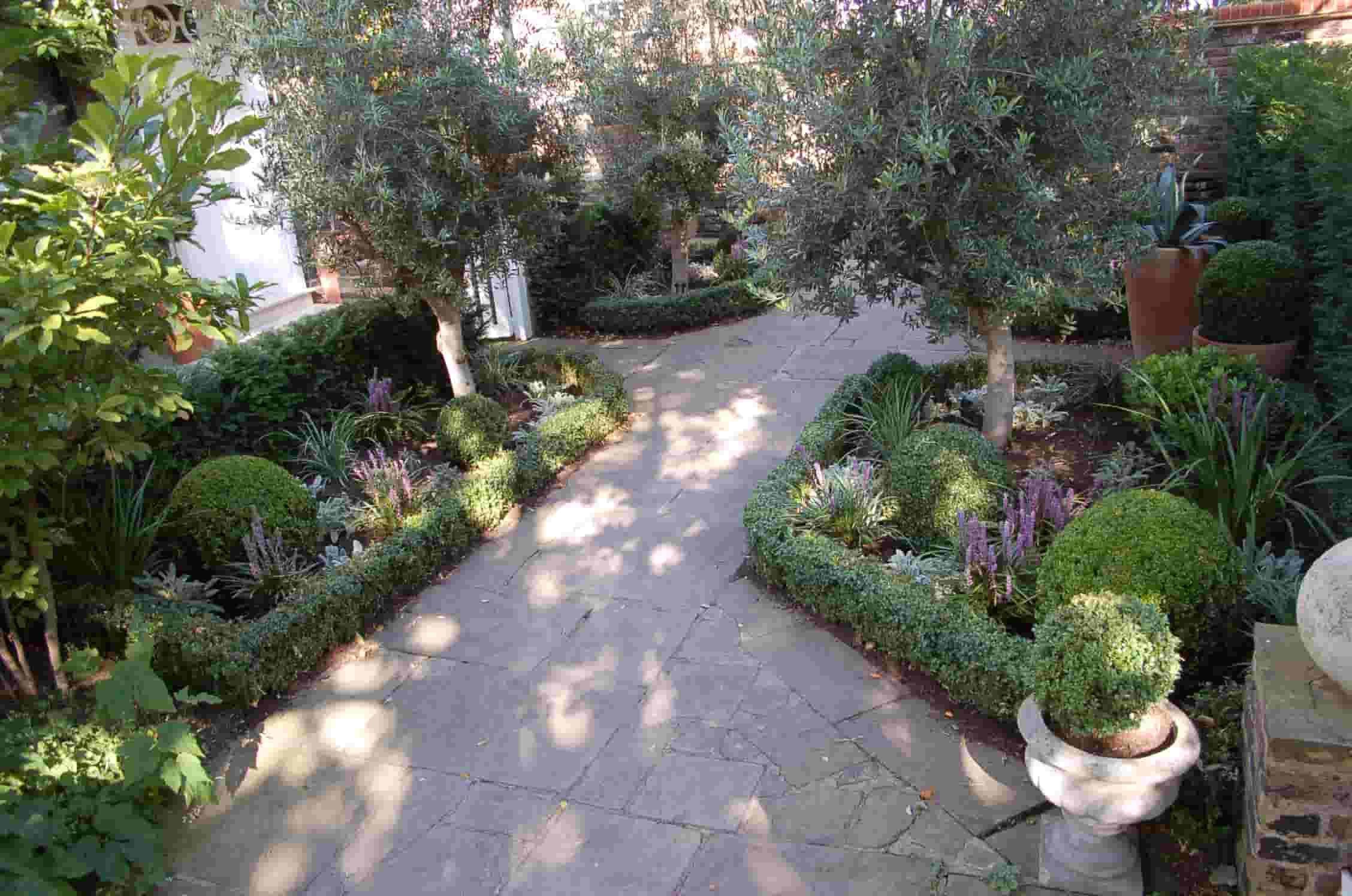 Olives U0026 Box | Living Colour Gardens