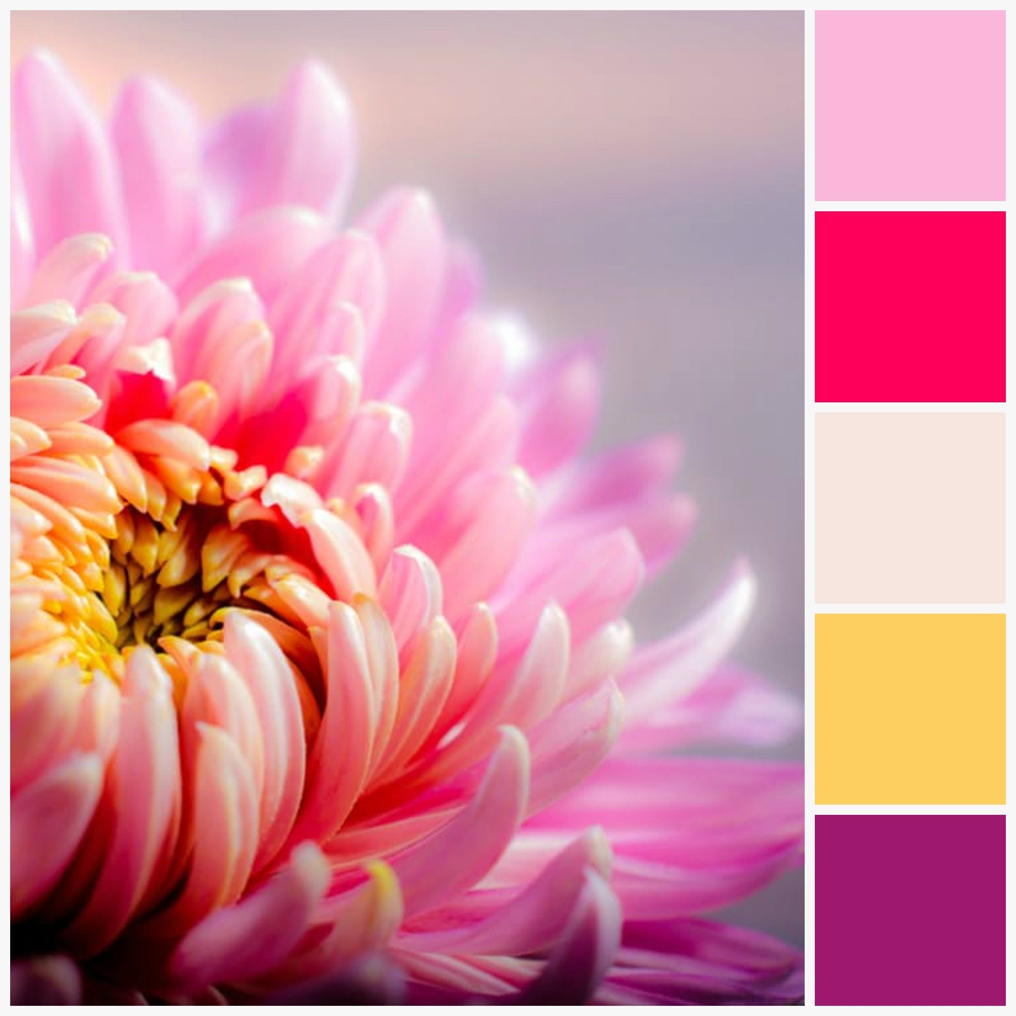 Colour Palette (With images) Birth month flowers, Month