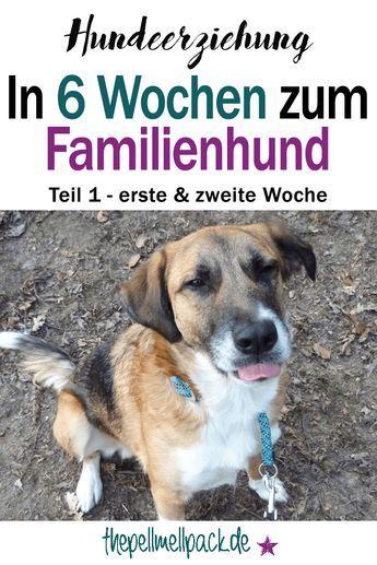 Photo of ¿Un perro de familia en 6 semanas? – Parte 1 de nuestro entrenamiento de perros | El paquete Pell-Mell