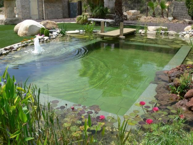 salt water pool with fish. mazing green pools which do not have chemicals chlorine or salt water the plants are responsible for keeping clean and clear pool with fish