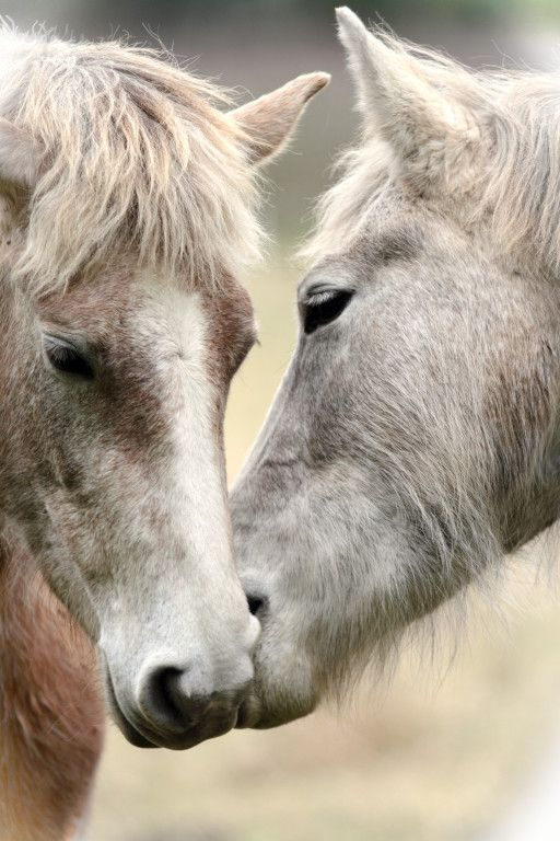 Horse love by Dragonfly1976