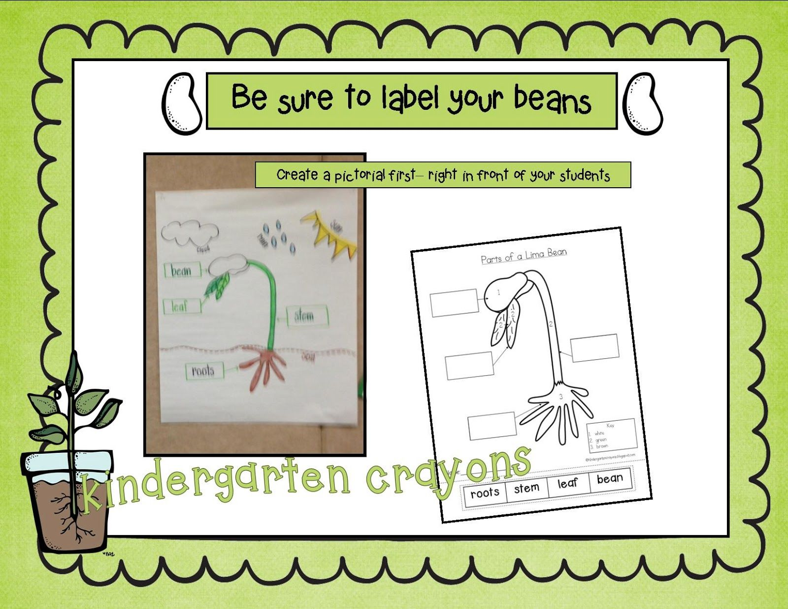 Kindergarten Crayons Please Label Your Parts A Lima Bean Pictorial And Cut And Paste Freebie