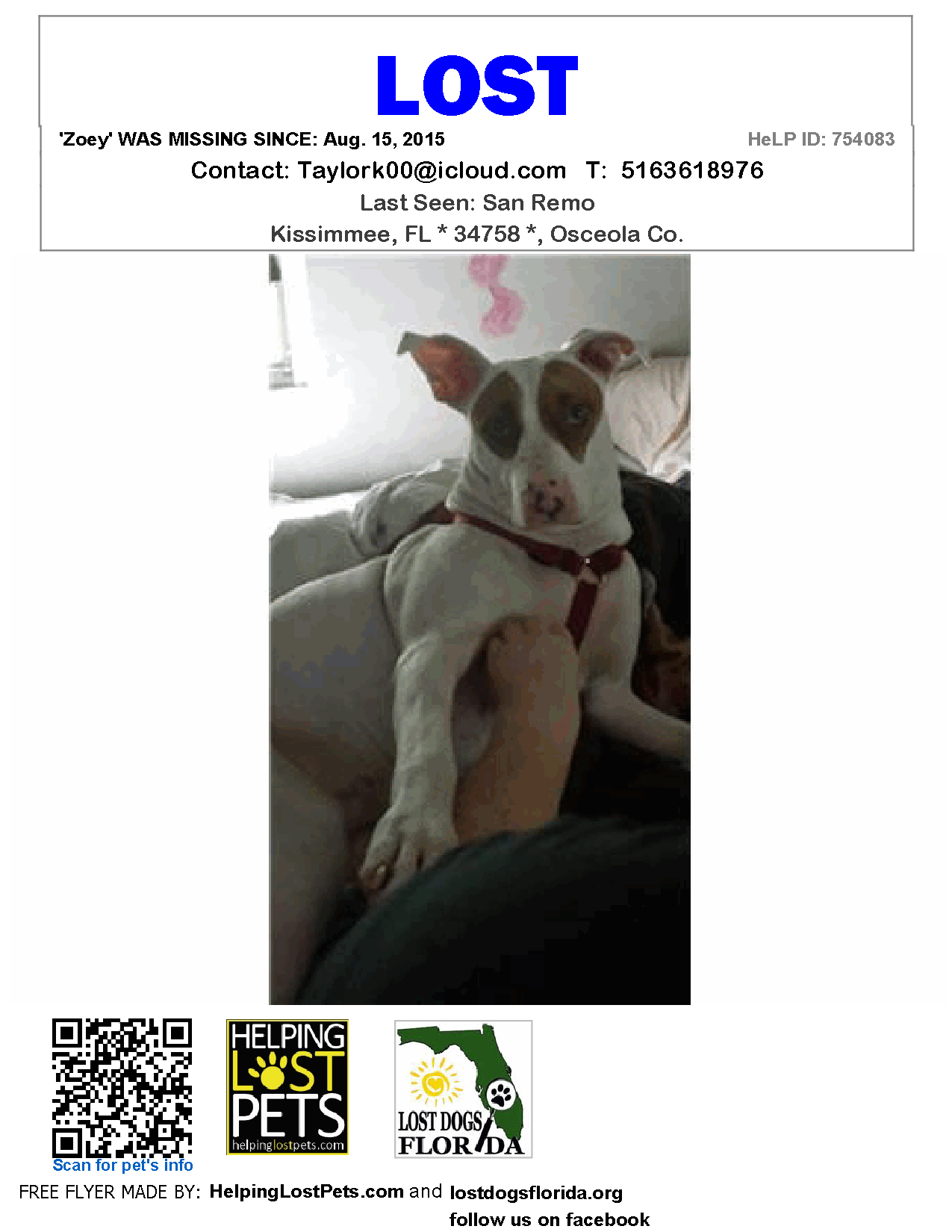Lost Dog - Mix - Kissimmee, FL, United States