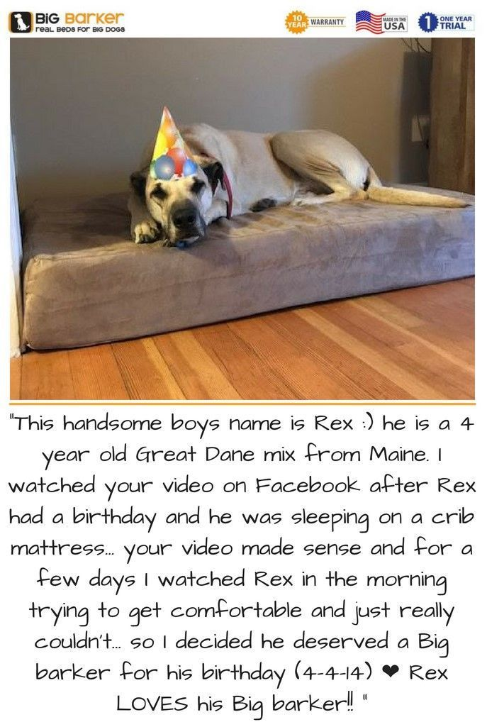 Orthopedic Dog Beds for Large & Extra Large Dogs