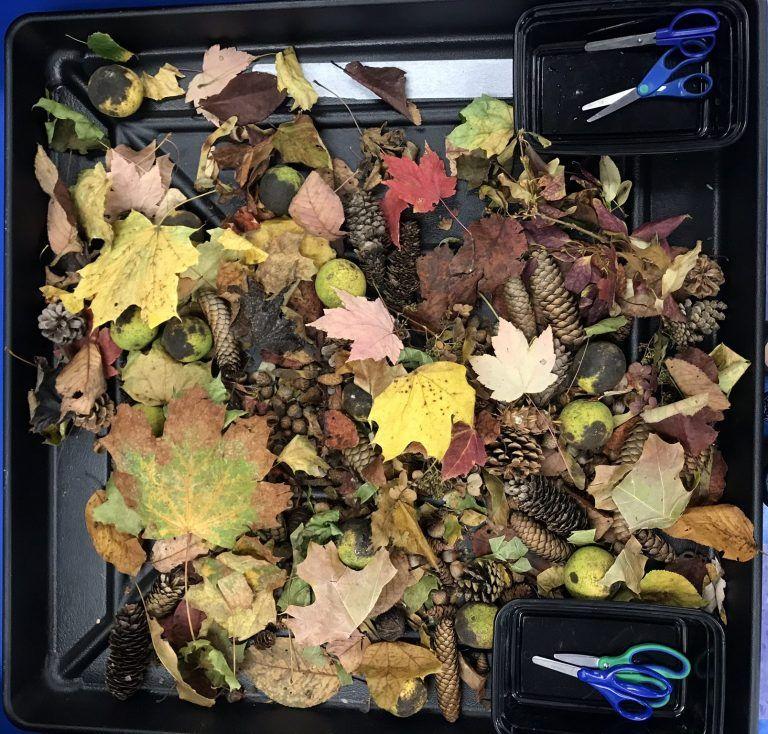 Celebration of Fall