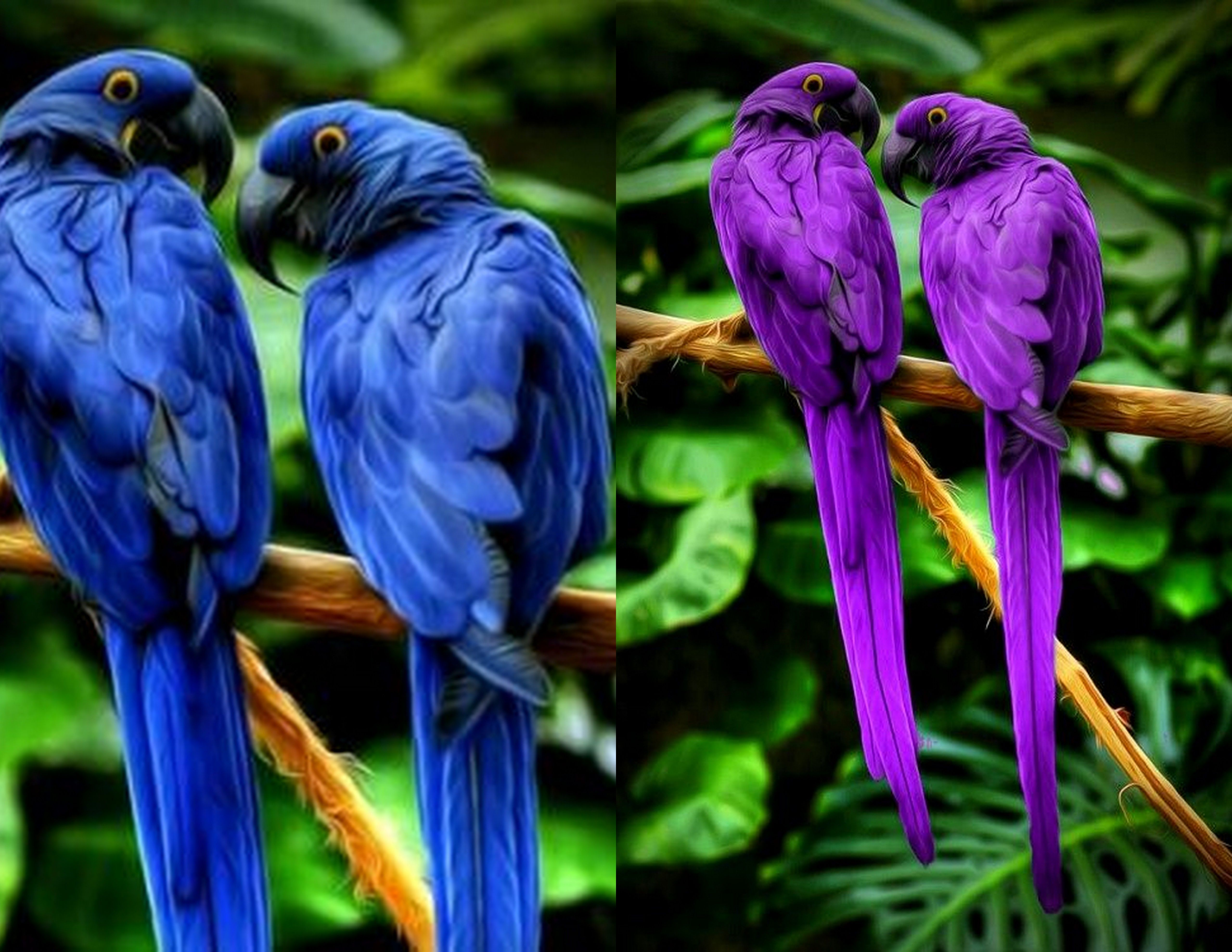 original image on the left fake purple parrots on the right