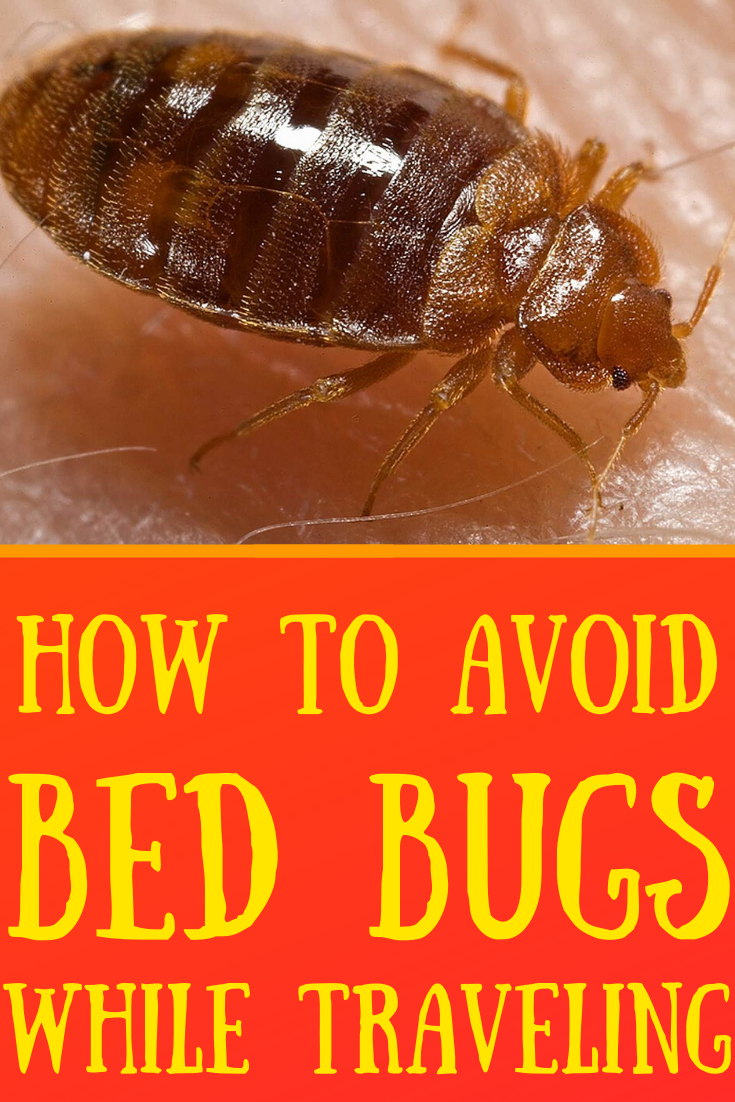How to Avoid Bed Bugs While Traveling Bed bugs