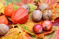 Foliage with walnuts and little apples Royalty Free Stock Photos