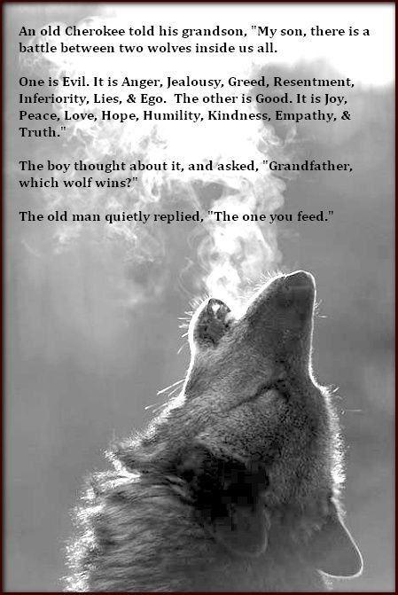 Wolf Tales Wolves In Native American Tradition Quotes Quotes