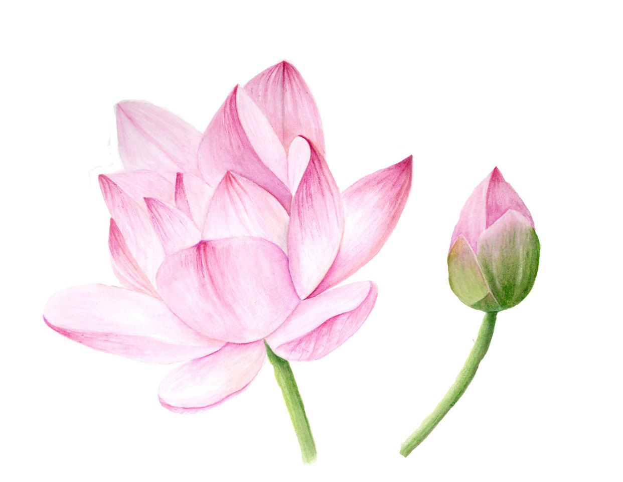 What Does A Lotus Flower Symbolism Gallery Flower Decoration Ideas