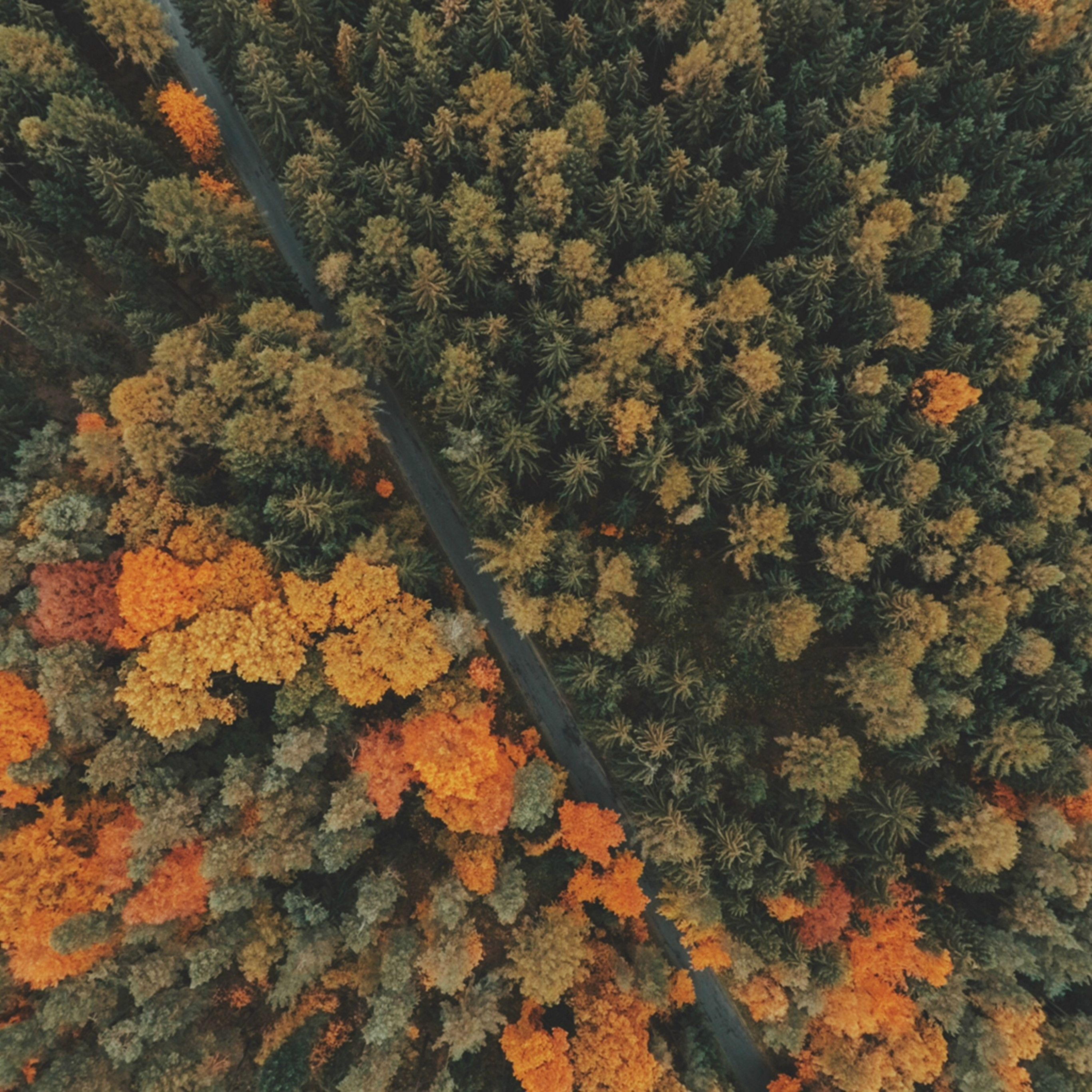 Forest Trees Top View Ipad Pro Wallpaper Desktop Wallpaper Fall Fall Wallpaper Trees Top View