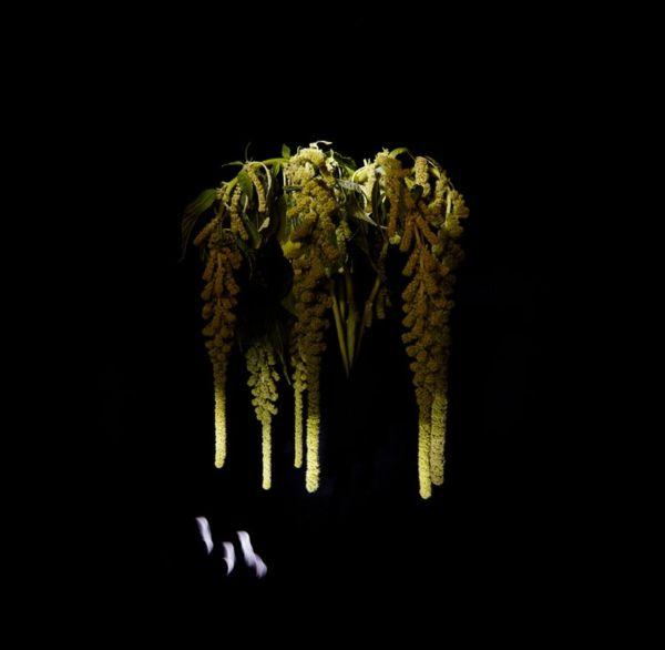 Feuerwerke Aus Pflanzen Von Sarah Illenberger Art Kunst