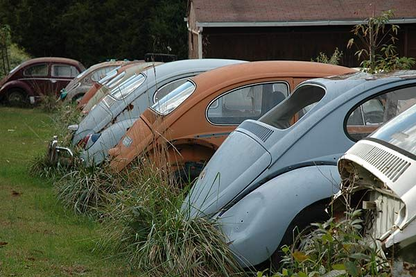 Row of old VW's