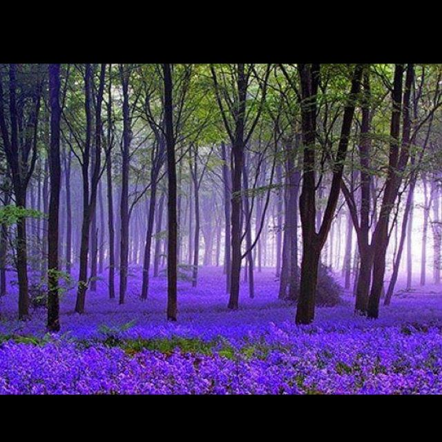 Enchanted Forest. color (lights) need to be en masse.....so it's uplifting