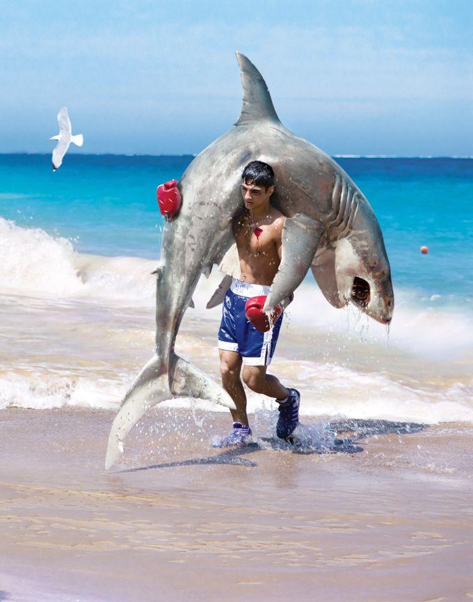 прогрессирует прикольные фото с акулами лежал больнице