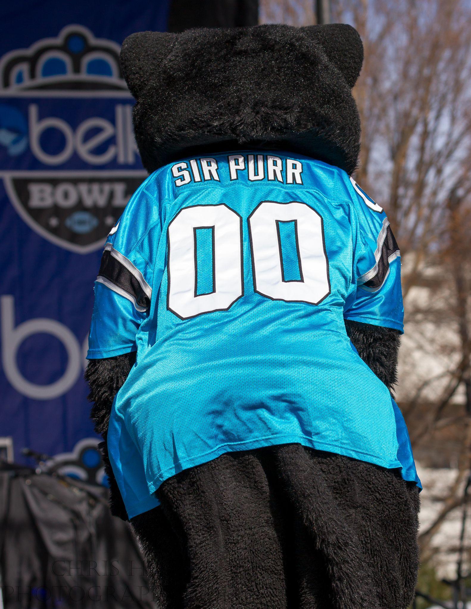 huge discount 2d3a6 b7e6f Carolina Panthers mascot Sir Purr | Man I Love College ...