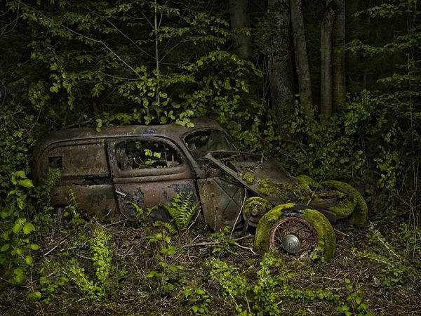 Paradise Parking: Automobiles Reclaimed by Nature