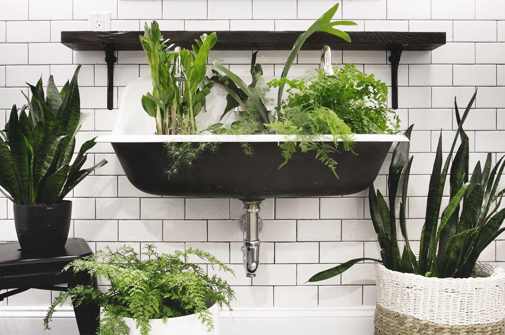 Three Plants That Thrive In Low Light Bathrooms Deuce Cities Henhouse Bathroom Plants Plants Bathroom Lighting