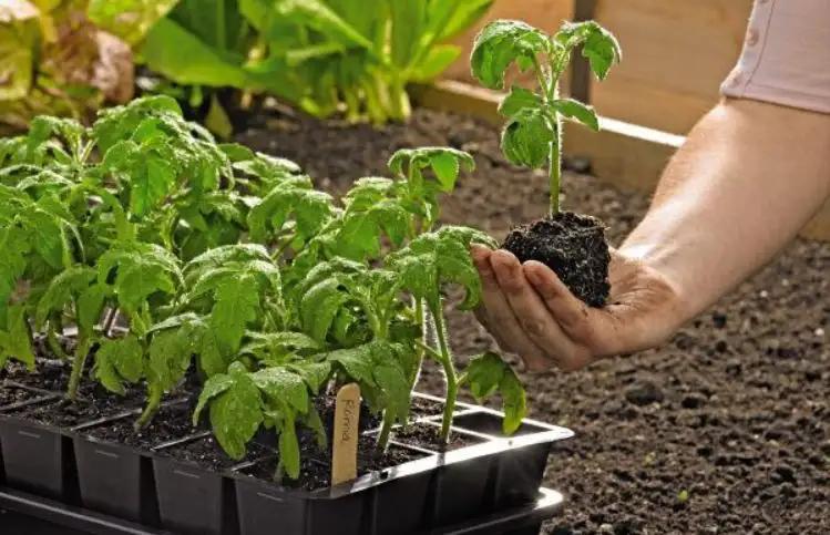 Growease Seed Starter Kit Free Shipping Gardener S Supply In 2020 Seed Starter Kit Seed Starter Starting A Vegetable Garden